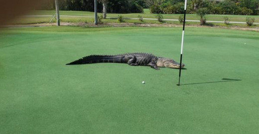 Even the most cool get the yips at times