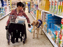Service Dogs: Special Companions