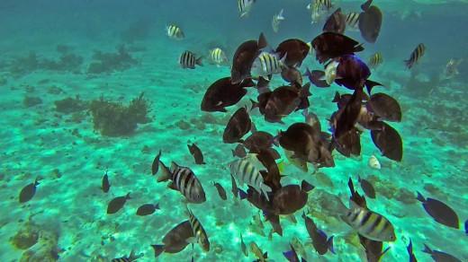 Jamaica Marine Life