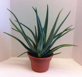 This plant would make a lovely addition to your home. You can use it this plant for the uses I just mentioned.