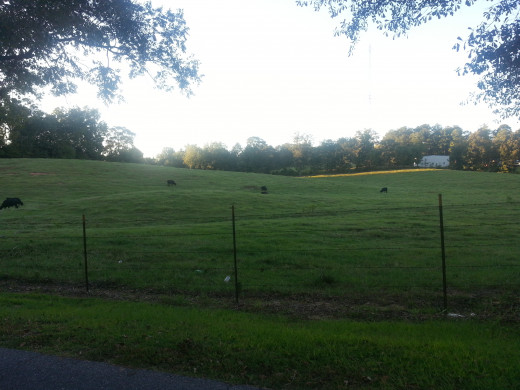 "Green pastures across from my home - I am reminded of Psalm 23, ...""Surely Your goodness and love shall follow me all the days of my life."""