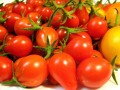 Types of Tomatoes: Bounty From Your Garden