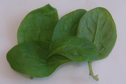 Baby leaf spinach leaves.