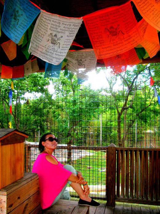 I was especially drawn to this area, as I also have these hanging in my backyard at home.  I love the idea behind these prayer flags, although I do not practice the religion.
