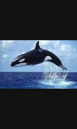 What animal can eat a elephant in a single swallow in the 21st century? A whale