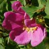 Herban Cowgirl profile image
