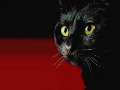 Searching for God in a Dark Room whilst Looking for a Black Cat?