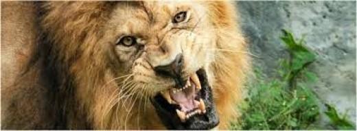 Like a lion seeking whom he may devour.