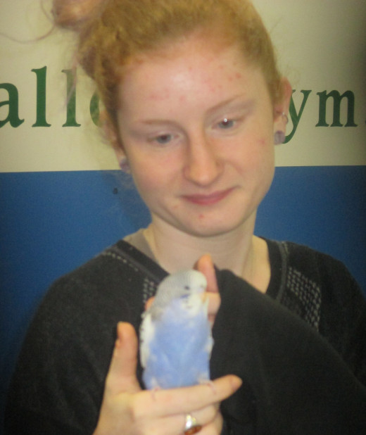 Girl and her buddy budgie at last week's Birds Of A Feather show in Manchester, NH. - Photo by George Sommers