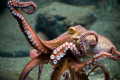 Paul the Octopus - The Luckiest Octopus to Ever Live