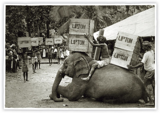 Lipton Tea crates being carted on elephants.