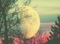 How Does the Moon Shine? (Poem)