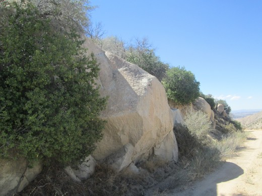 A large boulder next to the chaparral bush.