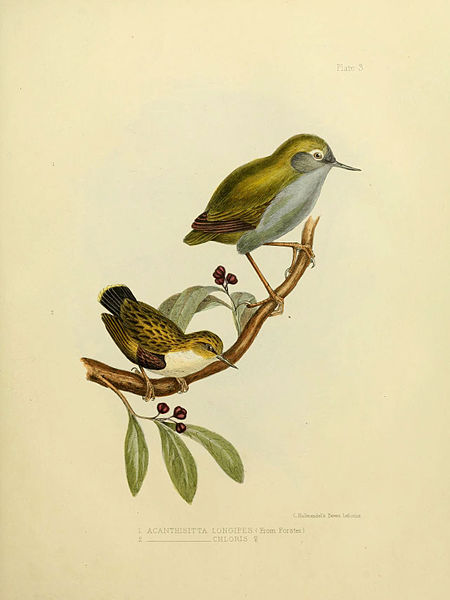 Originally taken from the Biodiversity Heritage Library.