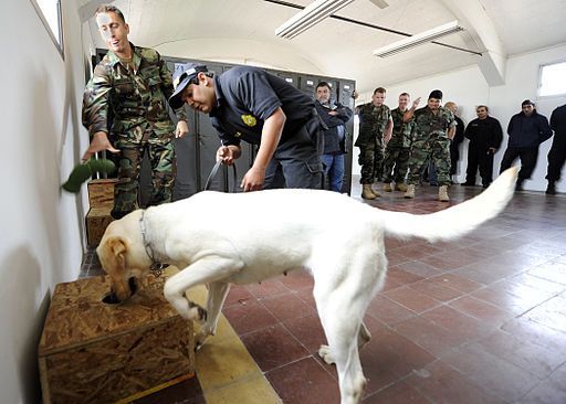 A U.S. Navy military working dog handler