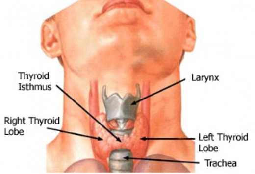 Thyroid hyperthyroid hypothyroid