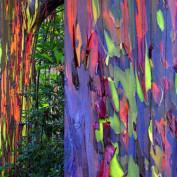 rainboweucalyptus profile image