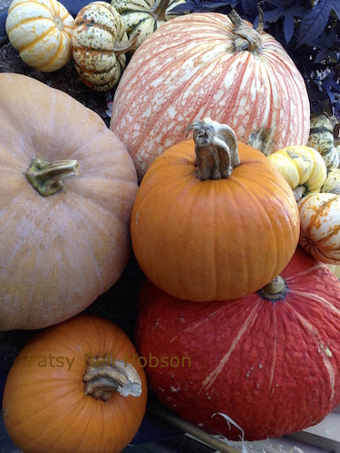 All pumpkins are easy to grow. Choose a variety of colors and shapes.