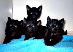 Kittens, Pitiful Little Kittens