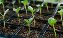 Home Gardening : Germination of seeds