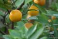 Compatible Cardio Caring Everyday Edibles: The Chosen Fruit