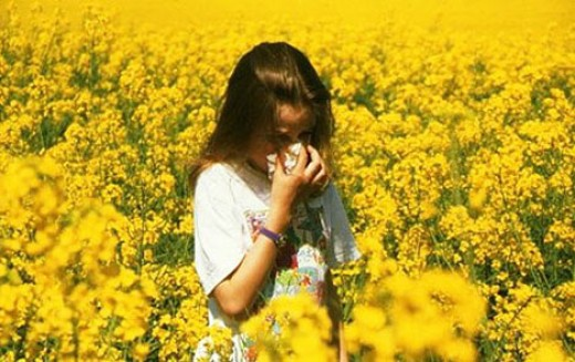 Hay Fever is Triggered by Pollen