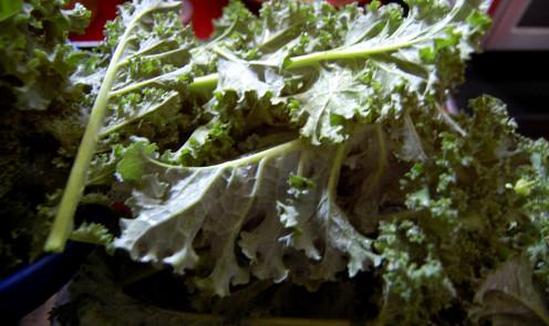 Organic Kale for Making Kale Chips