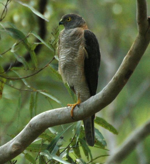 Taken in south east Queensland Australia