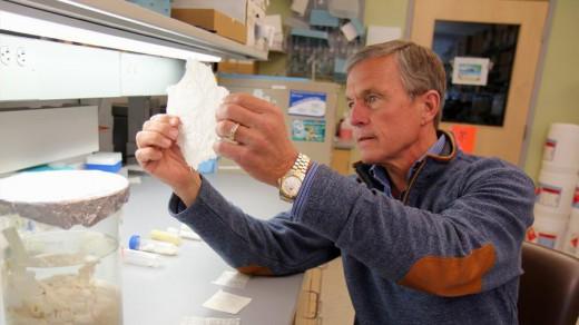 Dr. Stephen Badylak of University of Pittsburgh holding a sheet of extracellular matrix.