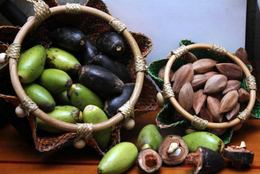Ten hectares of good farmland can hold 2,500 fruit-bearing Pili trees. Photo Source: chris-bech.com