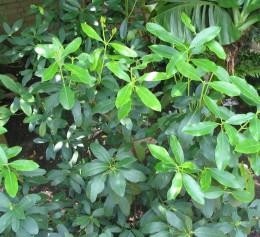 United States Botanical Garden