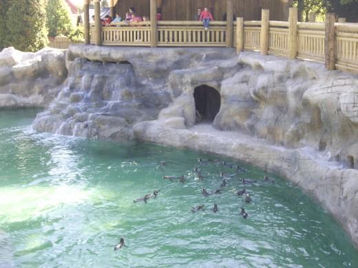 The penguin pool at Flamingo Land
