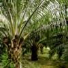 palmoil profile image