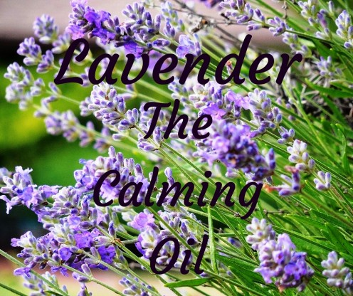 Lavender Oil has the ability to invoke and increase the release of serotonin, thus producing a calming effect on the body.