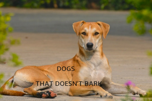 dog that doesn't bark - 520×346
