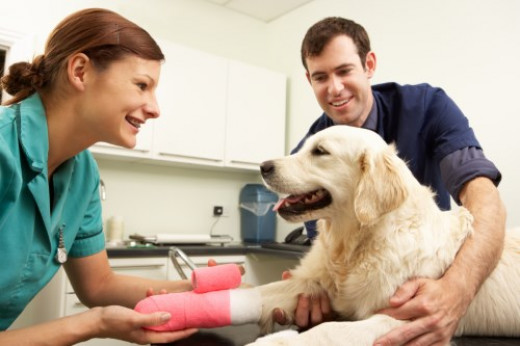 Consult your Vet for Good Advice on the Best Glucosamine for Dogs
