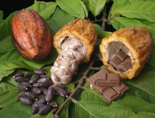 Ripe Cacao Pods (Photo Source: Posted by Amadeo, way back March 22, 2006, a Filipino of Tracy, California, USA via his blog: theignatianperspective.blogspot.com)