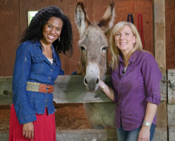 Flash: How a donkey taught us about life