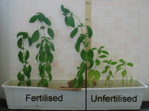 An experiment showing two plants with and without urine.