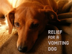 vet approved home remedies for upset stomachs in dogs. Black Bedroom Furniture Sets. Home Design Ideas