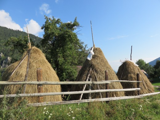 Traditional hay stacks in Transylvania, Romania