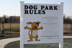 Dog Parks: The Five Things Every Dog Owner Should Know