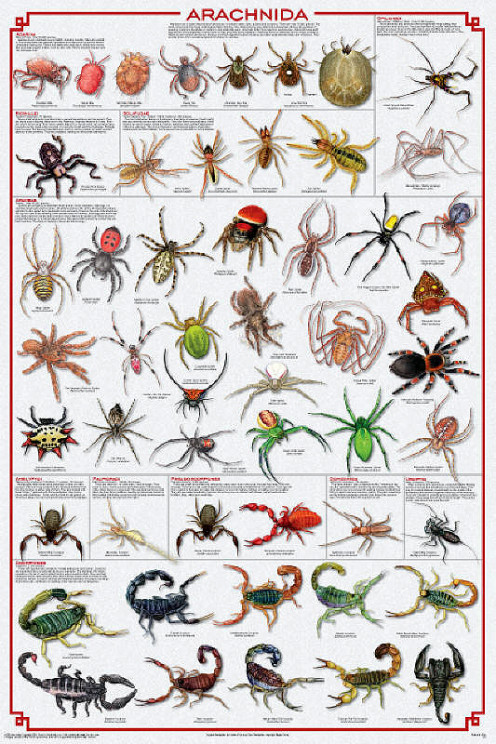 Members of the Order Arachnida