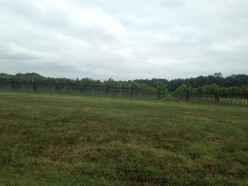 A Review: Williamsburg Winery