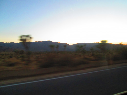 The Joshua trees are zooming by.
