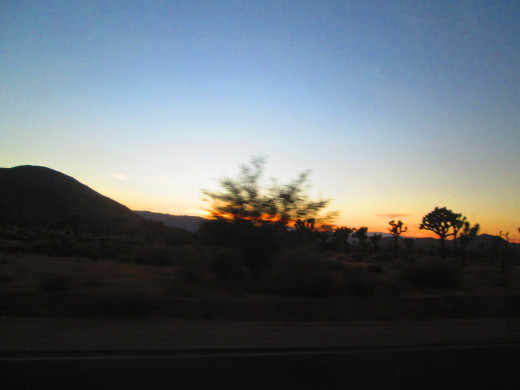 Sunset and the view of more Joshua trees.