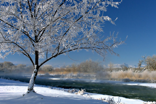 Winter Scene