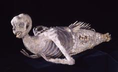 P.T. Barnum's Feejee Mermaid Hoax