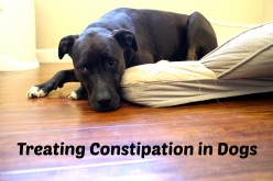 Vet-Approved Home Remedies for Dog Constipation