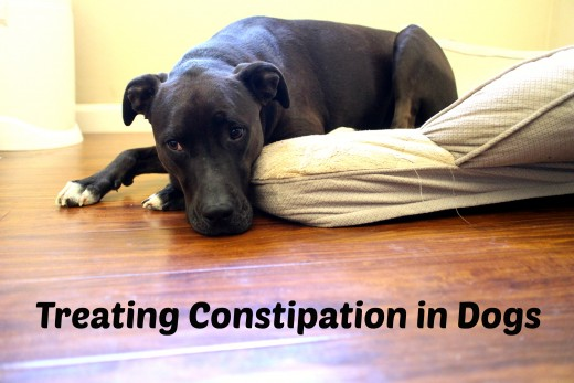 Is it safe to treat dog diarrhea at home?